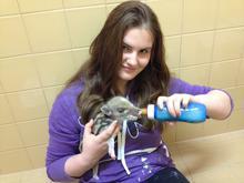 Eva Melzerová si při dobrovolnické praxi v Záchranné stanici pro živočichy  vyzkoušela například krmení selete prasete divokého. (Foto: archiv ČSOP Vlašim)